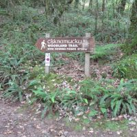 Glengarriff Woods - Esknamucky Trail