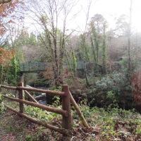Glengarriff Woods - Big Meadow Walk