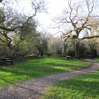 Glengarriff Woods - Riverside Walk