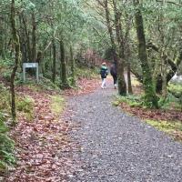 Glengarriff Woods - Waterfall Walk