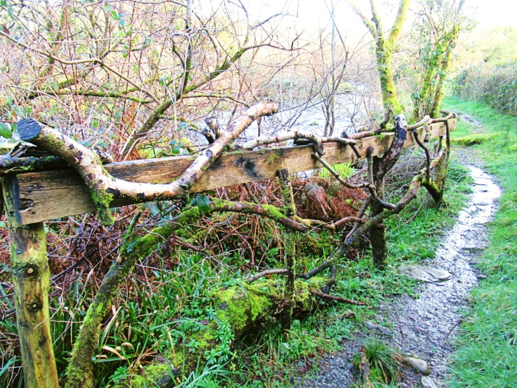 rustic fencework using branches along Ilen riverbank
