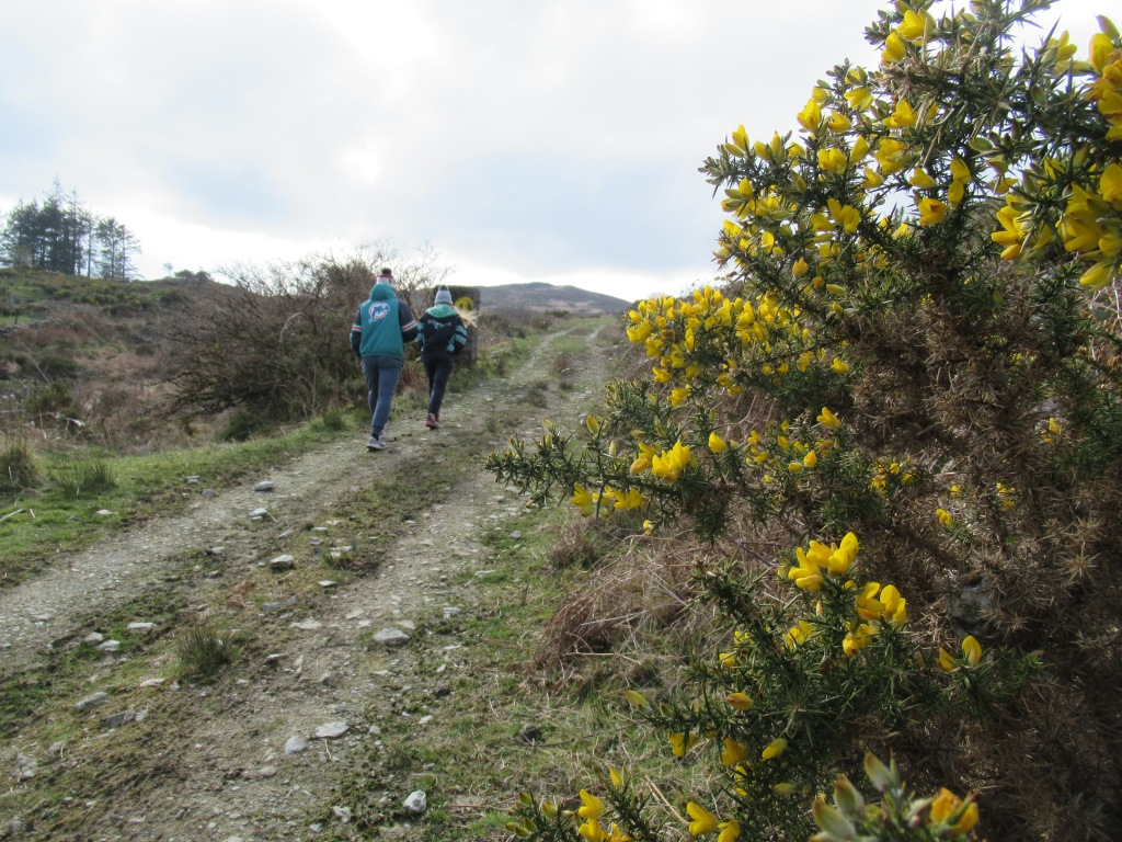 Children walking on mountain path with gorse